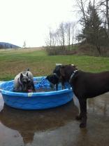 Beau, Cinder & Otis