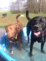 Ms Darby pool time with Ms Lilly