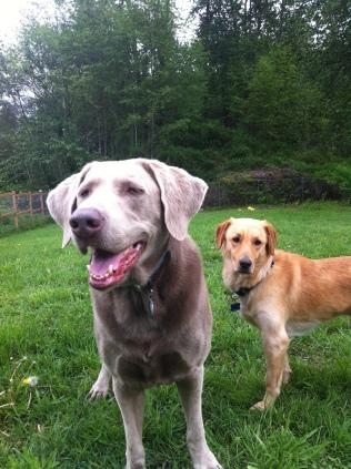 Max & Linus