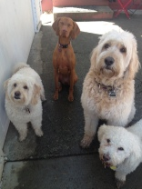 Ms Abby, Maui, Teddy & Aria
