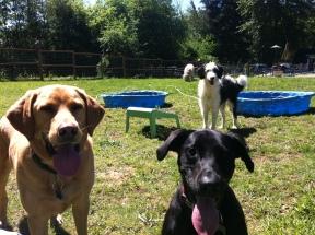 Riley, Oscar & Sunny