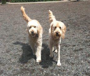 The Twins Maui & Zoie