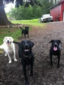 Liza, Harley, Oscar & Lilly