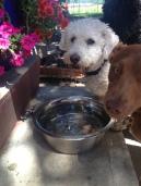 Teddy & Darby