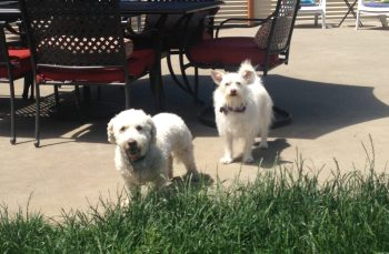 Teddy & Gracie