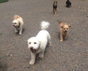The Little Pack Teddy, Chica, Spenser, Laughing & Pepper
