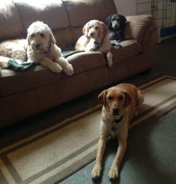 Maui, Patron, Milou & Riley