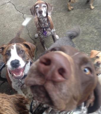 Blue, Gracie & Petey