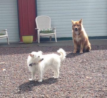 Daisy & Flossie