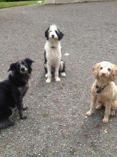 Cinder, Sunny & Patron