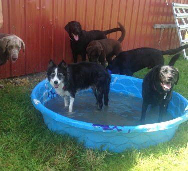 Max, Sophie, Lilly, Harley & Otis