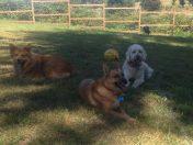 Flossie, Molly & Maui