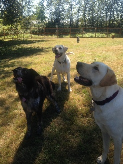 Cinder, Buddy & Gunner