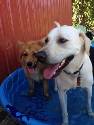 Flossie & Buddy