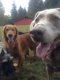 Beau, Duke & Max