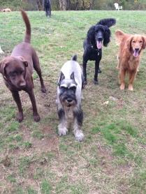Otis, Beau, Rocky & Duke