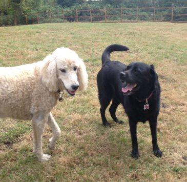 Lilo & Lilly
