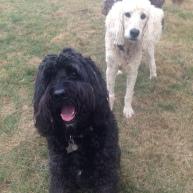 Benny & Lilo