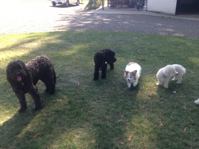 Benny, New Pup Mr Dino, Fusee & Teddy