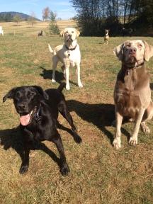 Oscar, Gunner, Max & Tucker