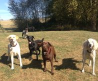 Gunner, Oscar,Otis, Lilo & Beau