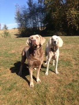 Max & Lilo