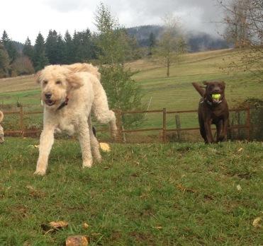 Zoie & Otis