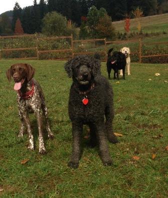Ruby, Bucky, Lilly & Bud Sr