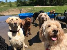 Gunner, Malia, Zoey, Max & Zoie