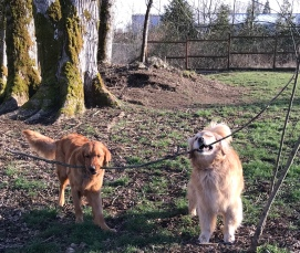 Griffey & Ginger