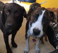 Otis & Gracie