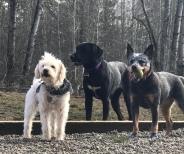 Apollo, Zoey & Piper