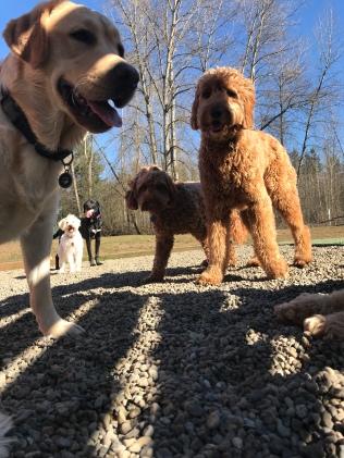 Watson, Malia, Parker, Apollo & Zoey